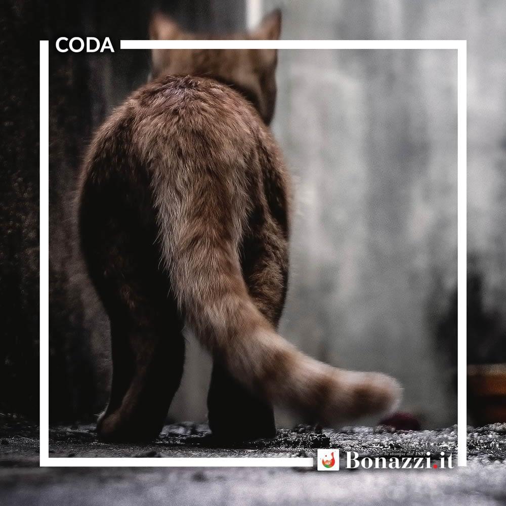 GLOSSARIO_Coda