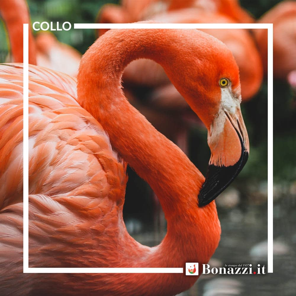 GLOSSARIO_Collo