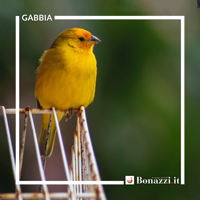 GLOSSARIO_Gabbia.jpg